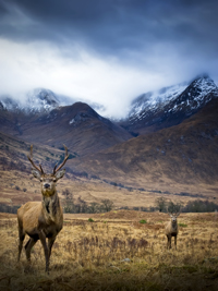 Glen Etive Red