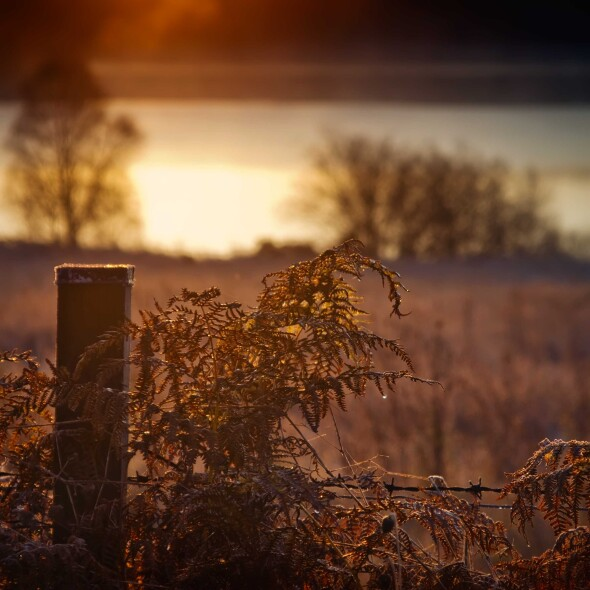 Scottish Autumn Gold…